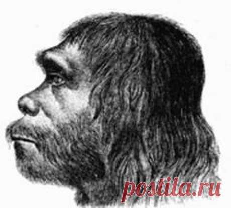 Сегодня 04 февраля в 1857 году День неандертальца: научной общественности впервые представили неандертальца