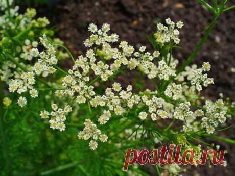 Пряные травы – перечень названий и описание с фото, применение в кулинарии