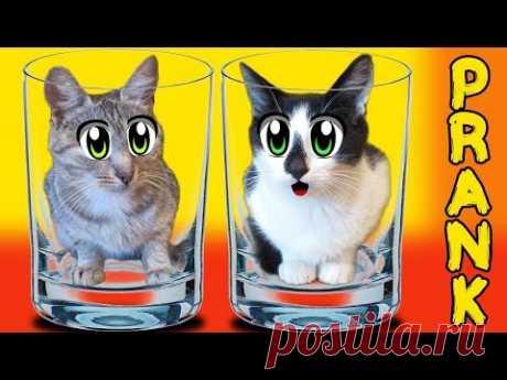 ПРИКОЛЫ от АНЮТЫ КОТ МАЛЫШ И КОШЕЧКА МУРКА В НОВЫХ РОЗЫГРЫШАХ! Смешные розыгрыши над котами