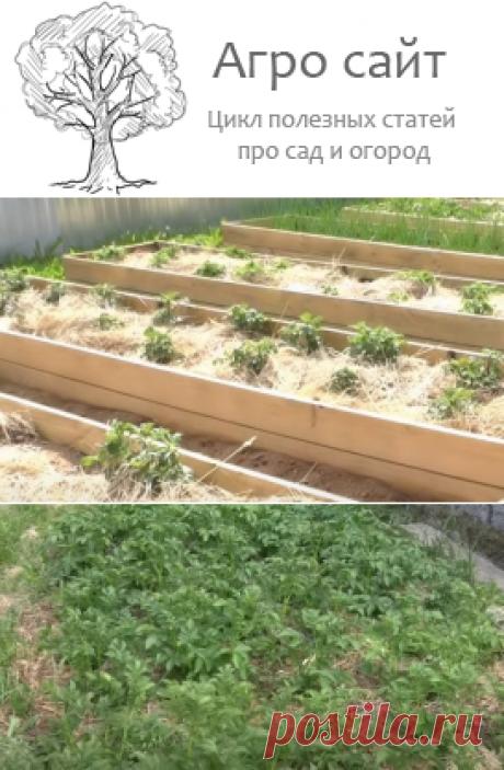 Картошка в сене - выращивание пошагово максимального урожая
