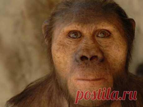 Принудительные опыты по скрещиванию человека с обезьянами