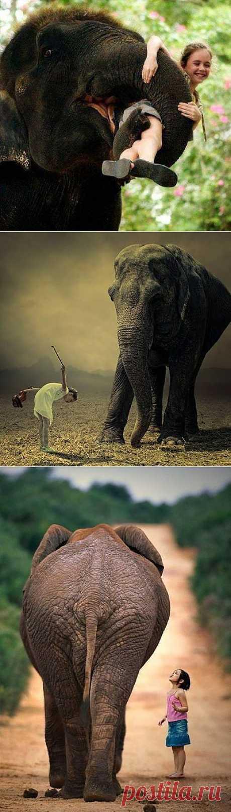 Con el amor. Los elefantes.