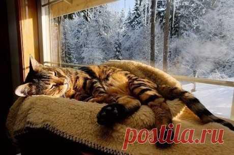 Присядь, хозяйка, у окошка О нашем, женском помурчим А знаешь, ты ведь тоже кошка Вот, правда, ты не рвешь гардин  Мышей не ловишь… ну, да ладно Не все мы, кошки — идеал Но ходишь ты на мягких лапах, Когда любимый спит, устав  Мурчишь, когда тебя целует Усатый твой двуногий кот Но если злишься… Алилуйя!!! По шерстке искры — милуй Бог!  А помнишь, фыркнула вчера ты? Ну, ладно б только на меня (Стащила ломтик сервелата) Ну, а за что же на кота?  Попал он тоже под раздачу Под...
