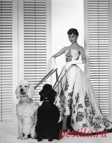 Annex - Hepburn, Audrey (Sabrina)_14.JPG (640×815)