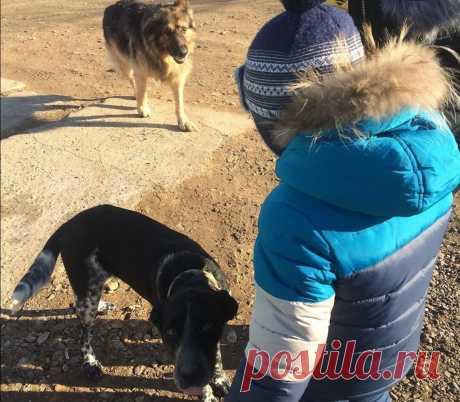 Дети с верными няньками собаками, весёлые моменты | Семья-Дети-Любовь | Яндекс Дзен
