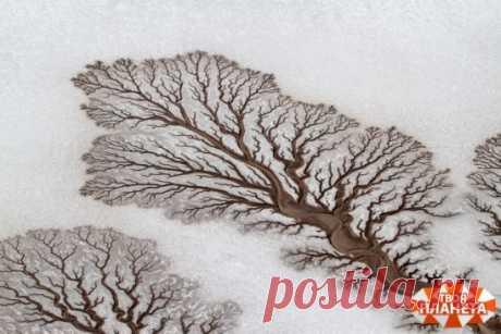 Реки образуют фигуры деревьев в пустыне Нижней Калифорнии в Мексике