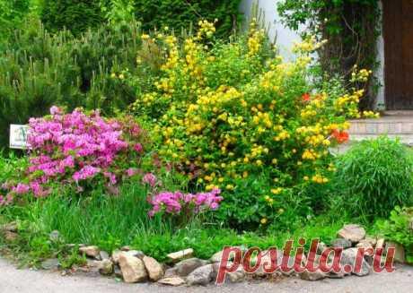 Календарь садовода и огородника на июнь, советы и рекомендации по июньским работам в саду