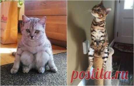 Коты, которые ставят в тупик своим поведением Пожалуй, каждый хотя бы раз в жизни слышал совет: «Хочешь привести нервы в порядок, заведи кота!» Но глядя на фотографии милейших животных, собранных в этом обзоре, начинаешь сомневаться, действительн...