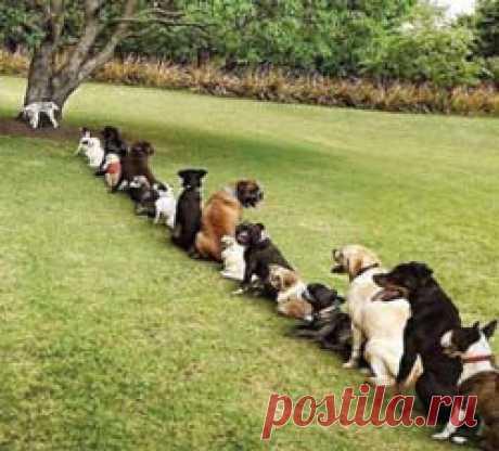 Как приучить щенка к туалету на улице? Приучаем щенка ходить в туалет только на улице.