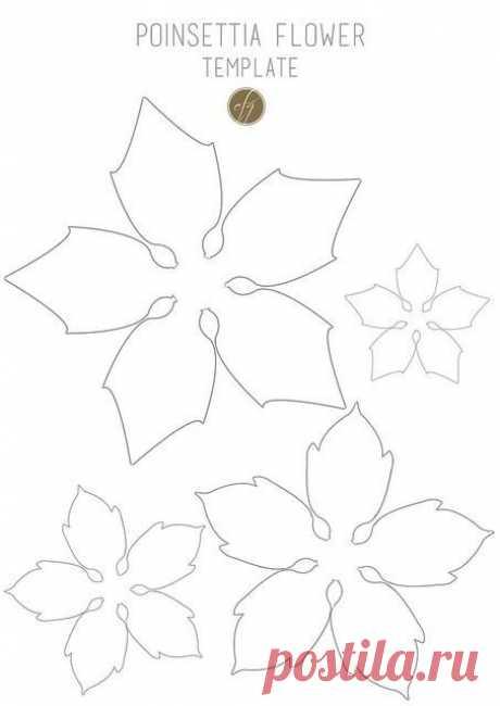 Выкройки для цветов из ткани, кожи, фоамирана из интернета