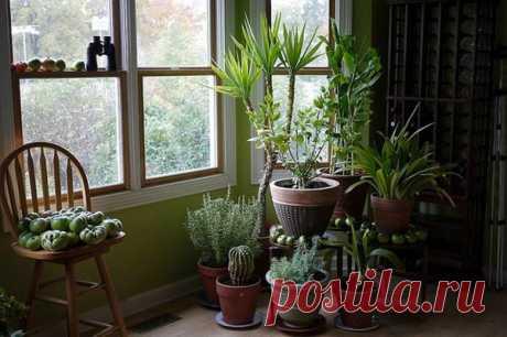5 ультрамодных, неприхотливых комнатных растений способных превратить Вашу квартиру в маленькие джунгли | Décor and Design | Яндекс Дзен