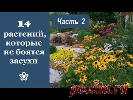 ❀ 14 красивых растений, которые не боятся засухи. Часть 2