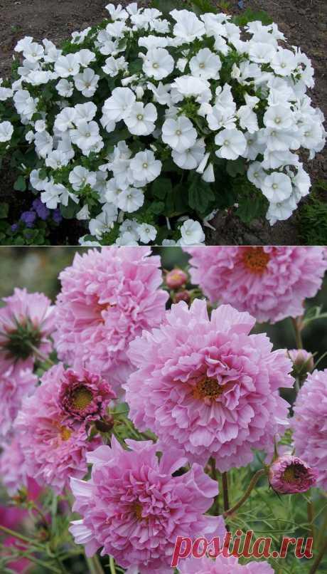 Цветы для начинающих | Самоцветик
