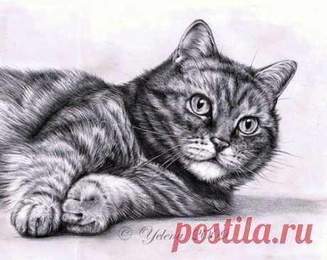 Рисуем котика — DIYIdeas