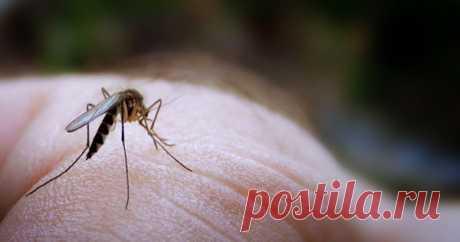 Забудьте о комарах! Средство от насекомых, сделанное в домашних условиях