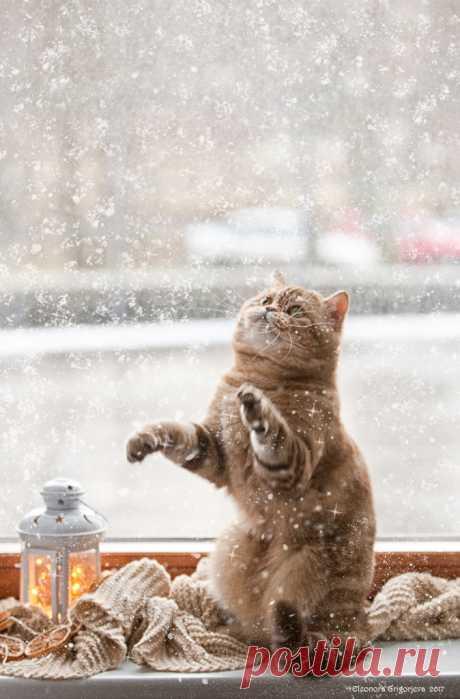 С Новым снегом!. Фотограф Eleonora Grigorjeva