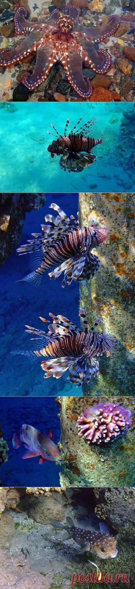 (+1) - Красное море.Параллельный мир. | Непутевые заметки