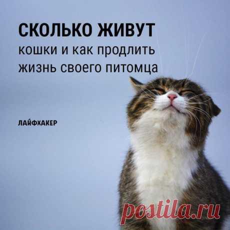 Для тех, кто хочет, чтобы любимый котик жил долго и счастливо: