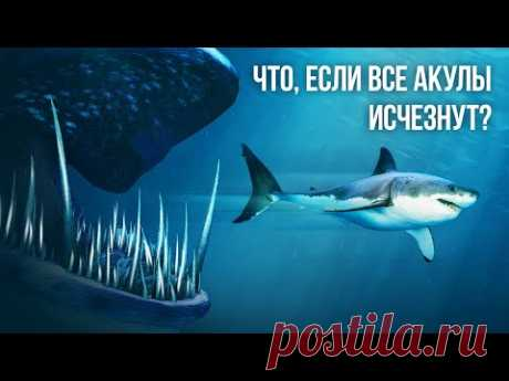 Что, если бы все виды акул внезапно исчезли