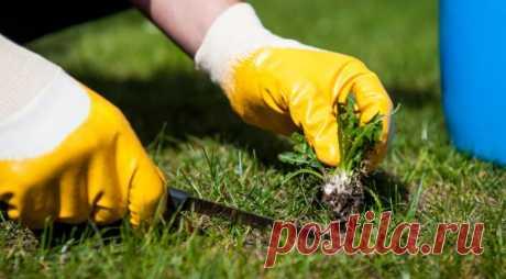 Нужно ли выпалывать сорняки осенью   Общество   Селдон Новости