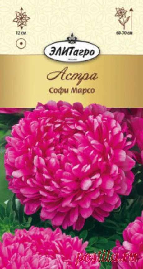 """Семена. Астра """"Софи Марсо пионовидная"""", однолетник Вес: 0,2 г. Всхожесть: 85%. Эффектная, долгоцветущая астра. Куст колонновидный, высотой до 65 см. Соцветия густомахровые, с плотно прижатыми и загнутыми в середину лепестками, диаметром 8-10 см. Сорт превосходно подходит для срезки (одно растение формирует до 8-10 цветоносов)."""