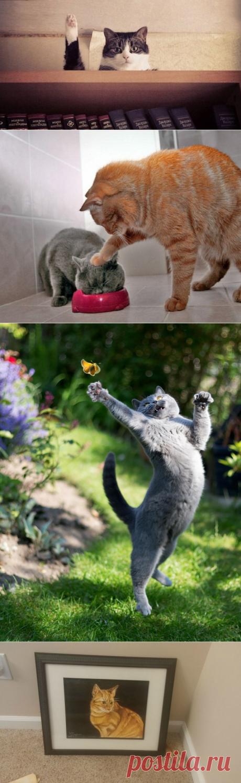 17фотографий котов, сделанных всамый нужный момент