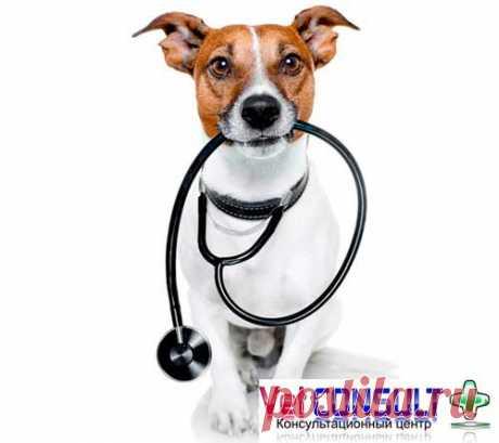 """Ветеринарний Кардіологічний Консультаційний Центр """"VetConsult+"""""""