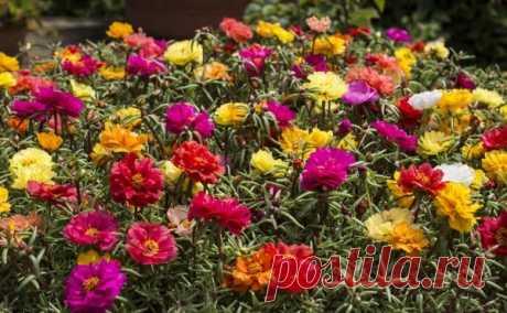 Любимые цветы / В буквы / eREAD.ME