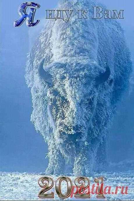 Наступает год... зимнего Быка! :)))