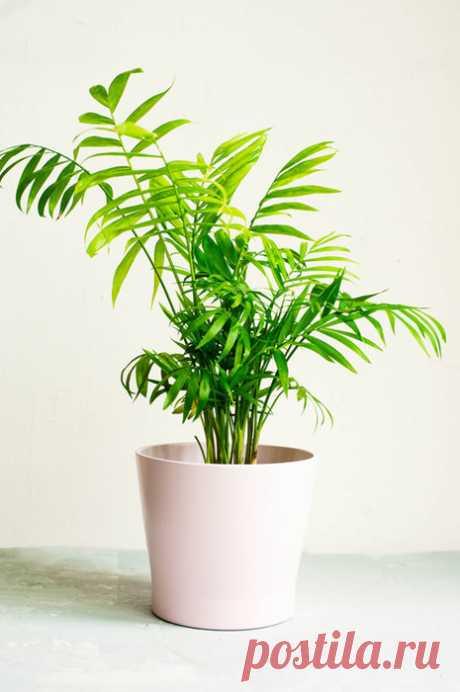 Комнатные растения, которым не нужно солнце Если подоконник уже заставлен растениями и ты хочешь посадить что-то еще, не требующее постоянного солнечного света, вот несколько отличных вариантов! Все они хорошо растут даже в маленьких темных помещениях.