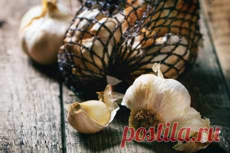 Top-5 the best ways of storage of garlic in the apartment | On a bed (Огород.ru)