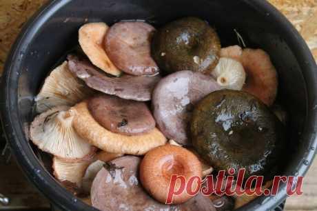 Посол грибов горячим способом. Быстрый вариант, который позволяет есть грибы уже на третьи сутки! | Деревенские записки | Яндекс Дзен