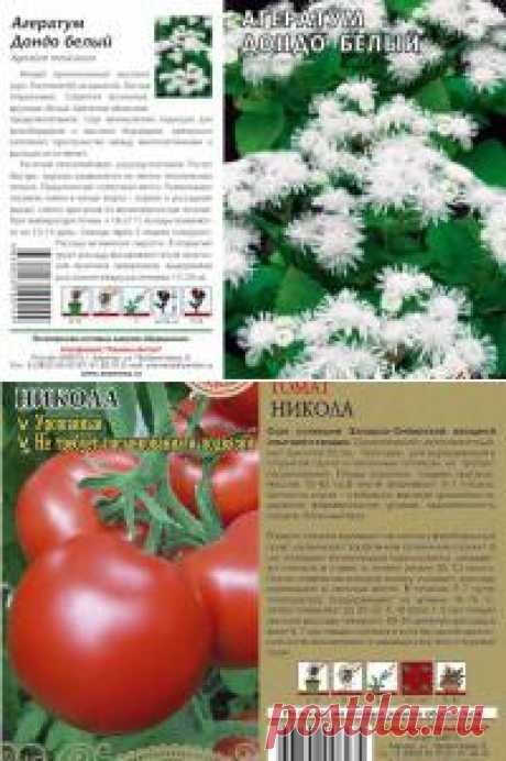 Семена овощей каталог - Семена Алтая