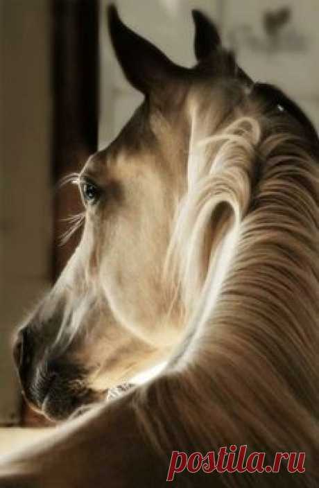 Charm of a horse