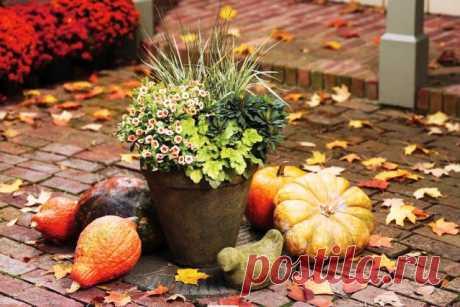 Лунный календарь садоводов и огородников на ноябрь 2021 года-Благоприятные посадочные дни