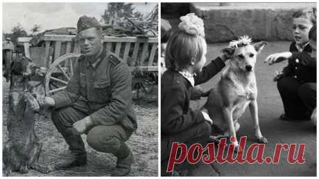 """How was to dogs in the Soviet Union? (thousands of stories about life of the USSR and as there was to people Were 31 photos) 