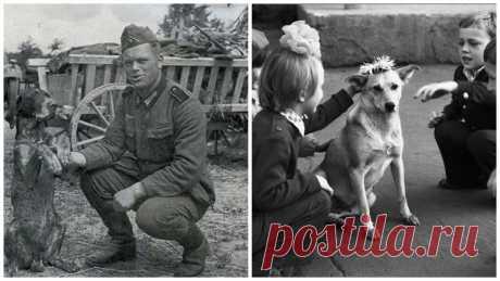 """¿Cómo vivía a los perros en la Unión Soviética? (31 fotos)   el Diablo toma Era mil de historias sobre la vida de la URSS, y como vivía allí a las personas. Mil de comentarios y las disputas de lo que la URSS - el país del sueño. ¿Pero cómo vivía a los hermanos por nuestro menor? Si prestar la atención a las fotografías, se puede ver que en CCCР los perros eran los obreros. Los usaban en las ramas diferentes, y cada perro tenía un asunto. Es ahora con con cada año cada vez menos cerca de perros de trabajo, cada vez más cerca de los favoritos \""""de diván\"""". Y el asunto sí..."""