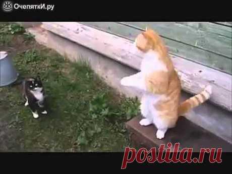 Только Русские коты так могут! Живот порвать можно! - YouTube