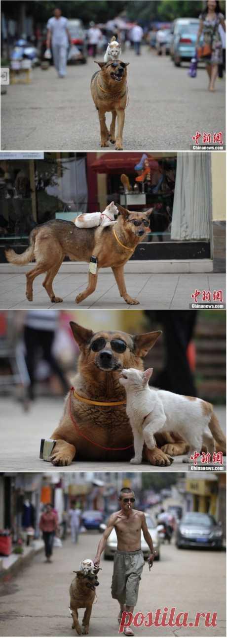 (+1) тема - Странная парочка на улице: собака и кошка вместе | Четвероногий юмор