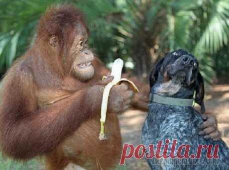 Шутки от обезьяны