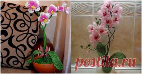 Орхидеи из бисера, которые будут цвести в вашем доме круглый год ...
