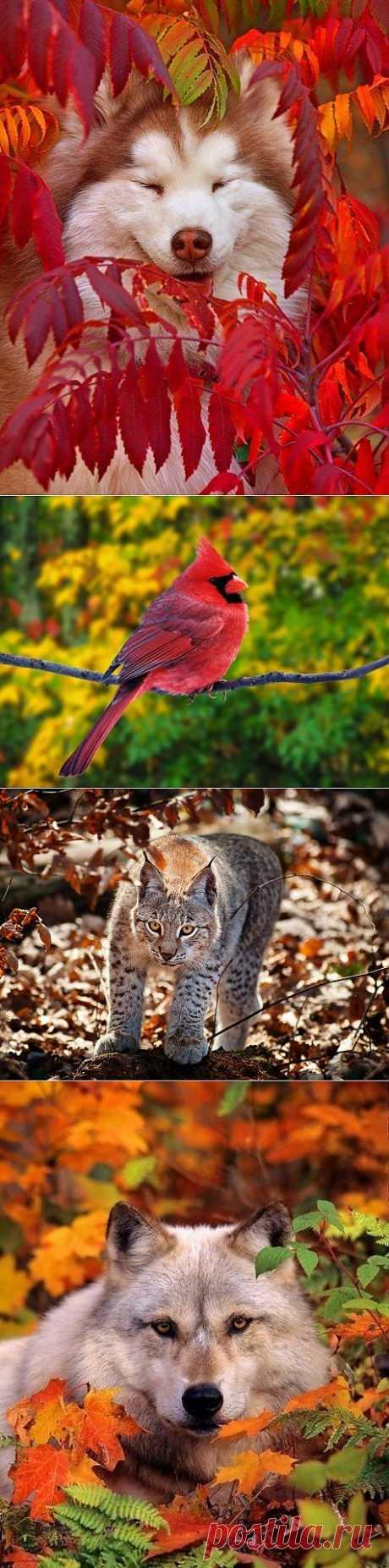 Животные тоже любят золотую осень.