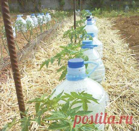 Пять правил полива растений в жару