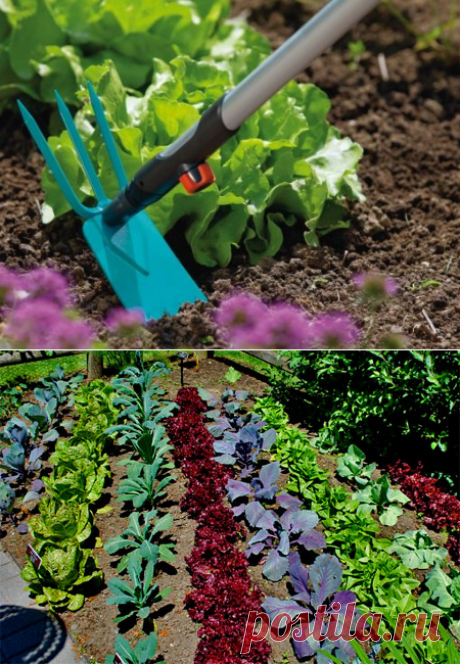 Огород | Дачный Дизайн — свежие идеи со всего мира