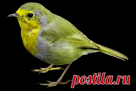 птицы в PNG: 6 тыс изображений найдено в Яндекс.Картинках