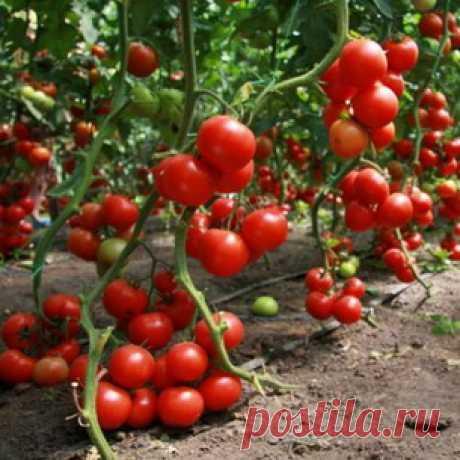 Лунный посевной календарь со знаками зодиака: плодородные знаки зодиака при посеве растений