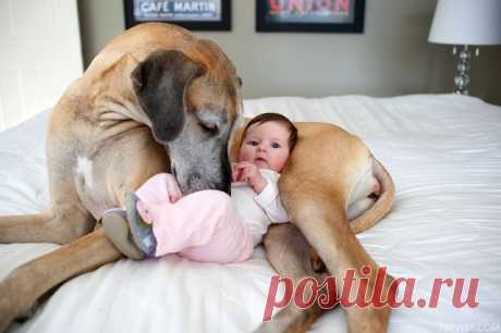 The Great Dane Who Became an Older Sister - My Modern Met