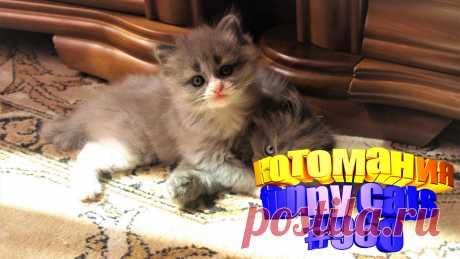 Вам нравится смотреть смешные видео про котов? Тогда мы уверены, Вам понравится наше видео 😍. Также на котомании Вас ждут: видео кот,видео кота,видео коте,видео котов,видео кошек,видео кошка,видео кошки,видео о котах, видео о кошках, видео с котиками, видео эти смешные кошки, котики мило, кошка видео, прикол видео кошек, приколы про животных до слез, про кошек смешное, самые смешные животные, смешно кошки, смешные видео про животных, смешные кошки видео