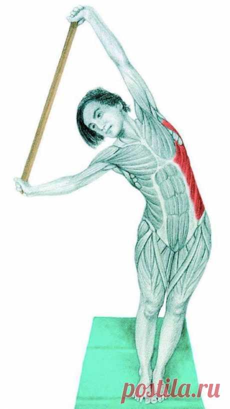 La anatomía stretchinga en las estampas: los ejercicios para todo el cuerpo - Layfhaker