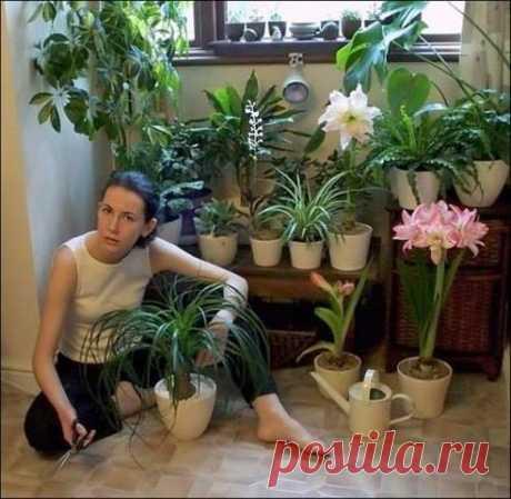 (98) Интересная подкормка для домашних цветов.... - Чудесные цветы. Beautiful flowers